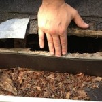 raccoon damage to roof, raccoon removal