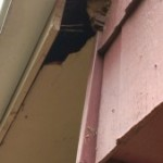 soffit damaged by raccoon, raccoon removal