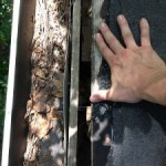 roof damage by raccoons, raccoon removal