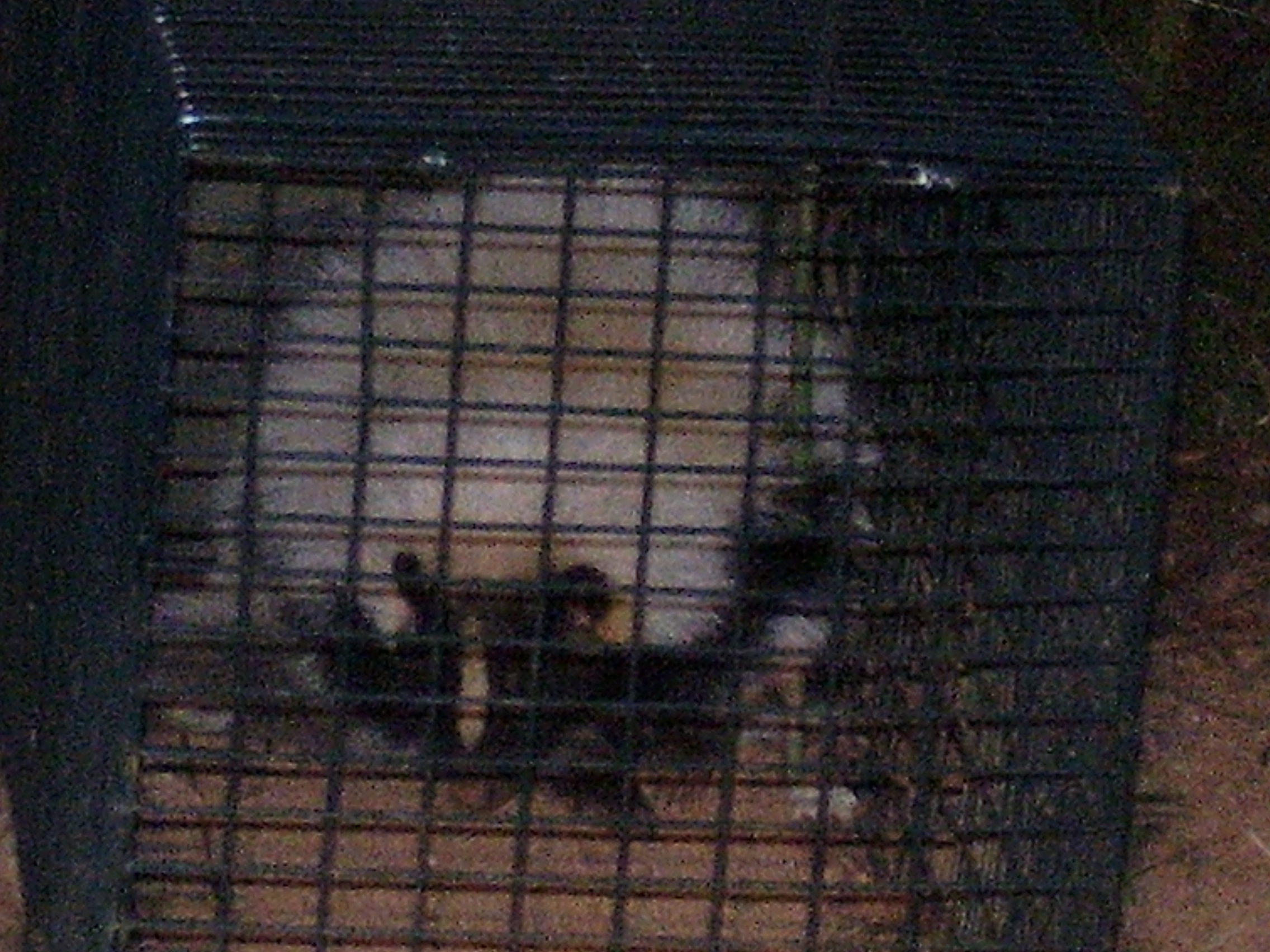 Skunk Trapping Skunk Removal And Trapping Georgia Paws