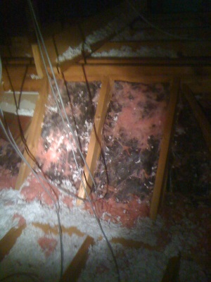 rodent damage to insulation 2