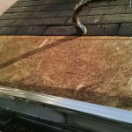 roof repair after squirrel removal