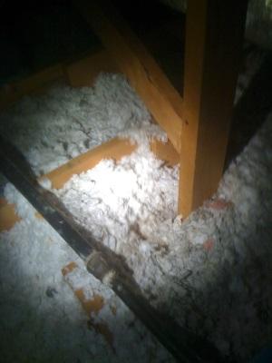 squirrel damage to insulation