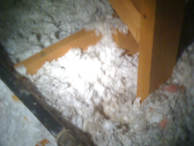 insulation damage after squirrel removal