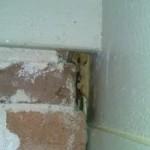 bathole, bat removal and bat trapping