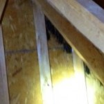 bats roosting in gable vent, bat removal