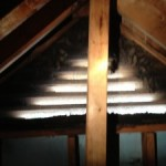 bats roosting in gable, bat removal