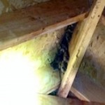 bats roosting in ridge vent, bat removal