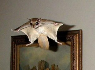 flying squirrel services in Monroe ga