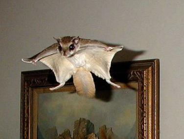 flying squirrel services in athens ga