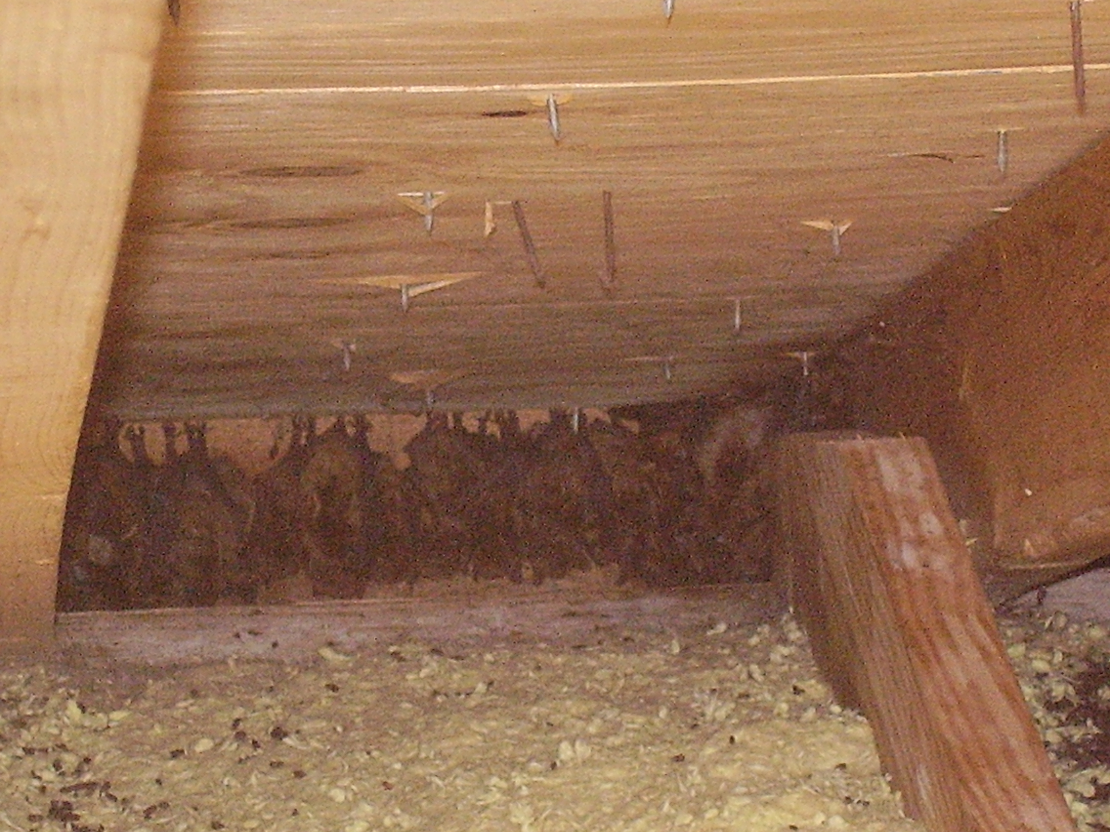 how to tell if bats are in your attic