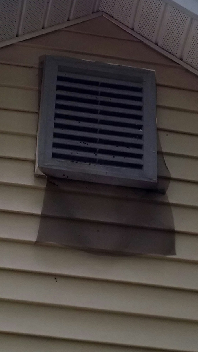 how to get rid of bats in your chimney